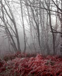 Red forest- stock
