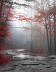 Red forest II- stock