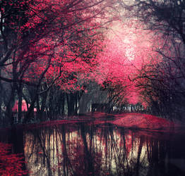 Pink forest - stock by Consuelo-Parra