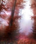 Red forest V - stock