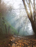 Autumn forest - stock