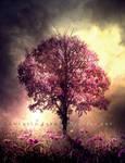 Dawn of dreams by Consuelo-Parra