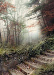 Forest stairs - premium stock
