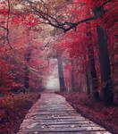 Red forest VI- premium stock