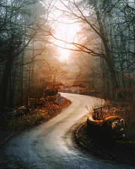 Forest path-premiun stock