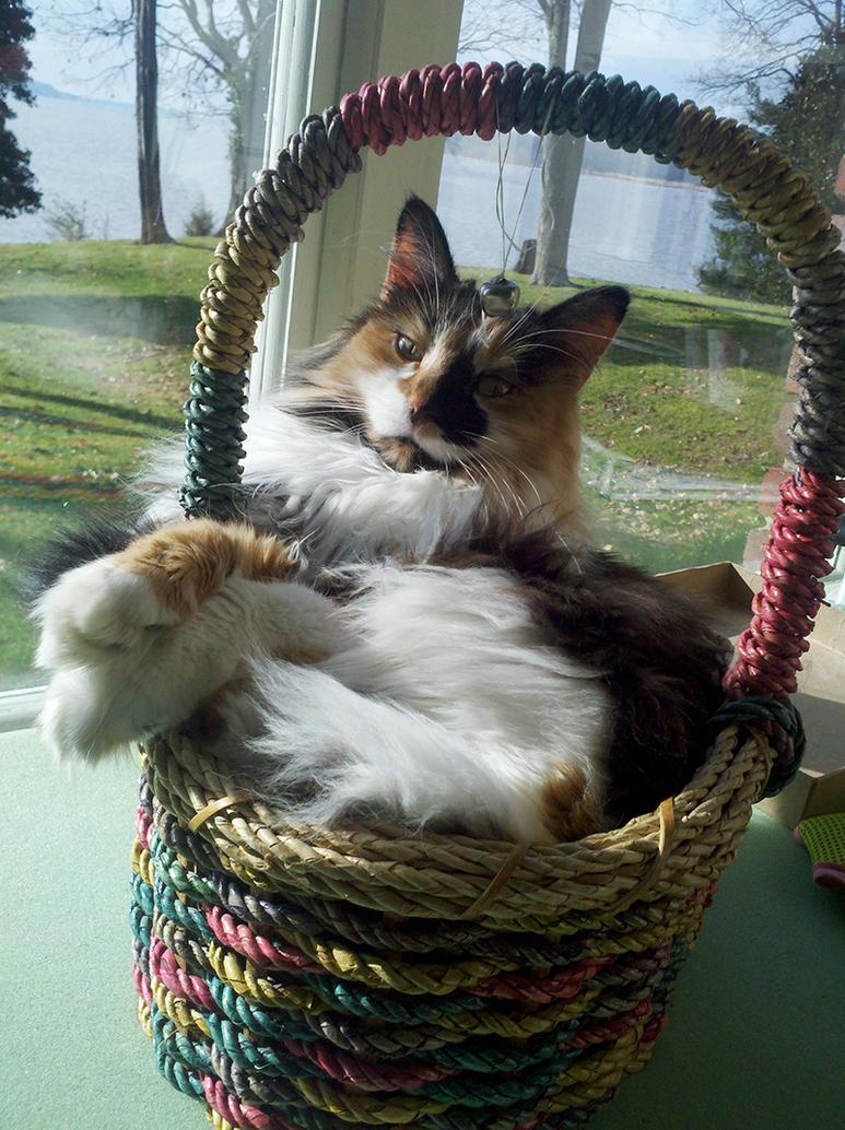 Basket kitty by WKJonesnet