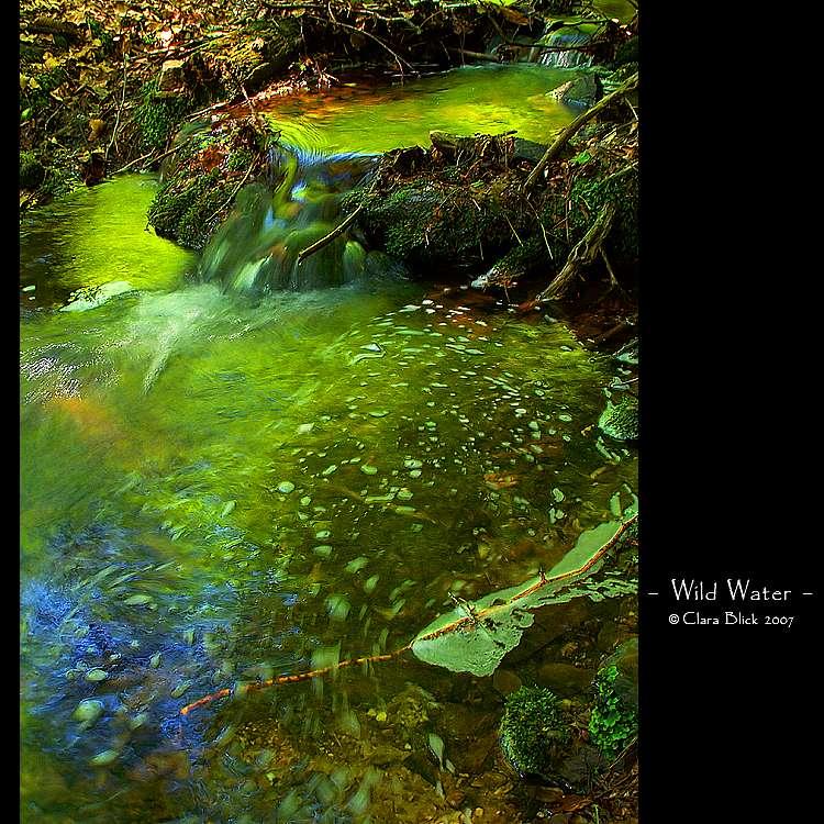 Wild Water by clarablick