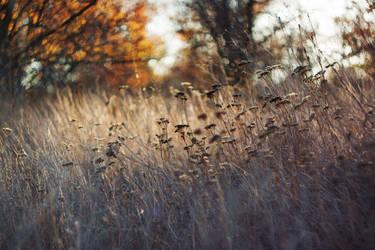Warm autumn by SunnyMel