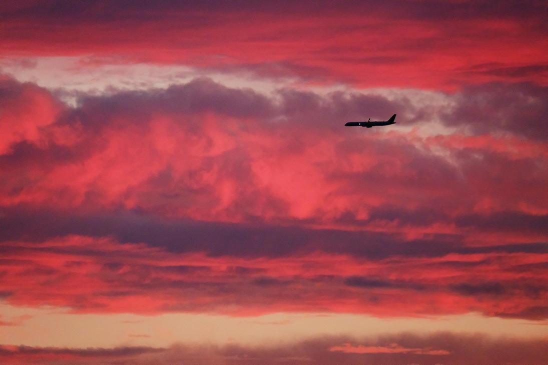 Purple Sunset Flight by yukosteel