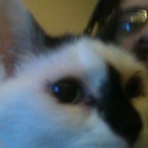 SeiMinuet's Profile Picture
