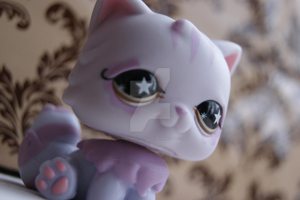 Cute cat by Black-Ofelia-Stock