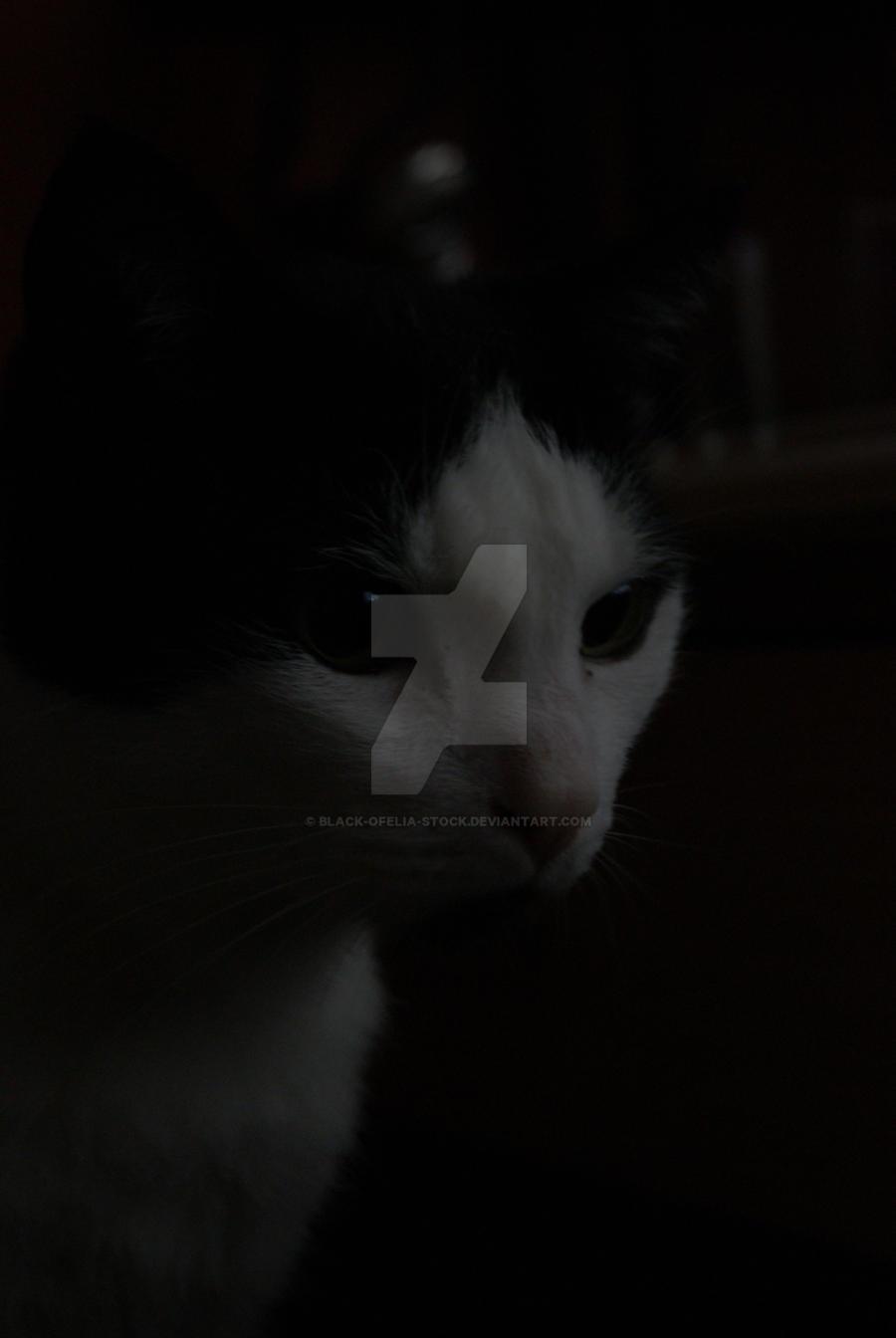 Shinkaze's cat by Black-Ofelia-Stock