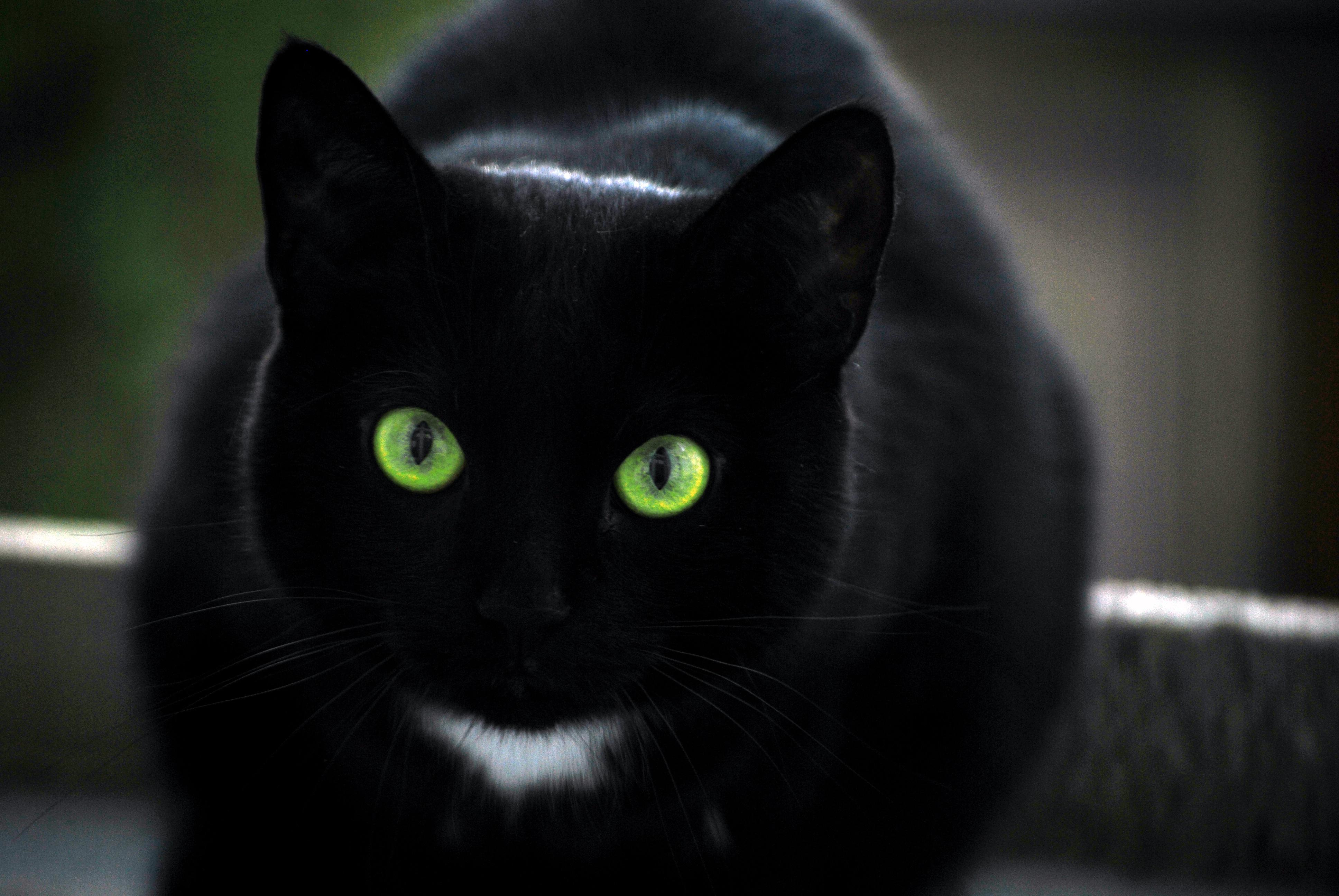 Cat With A Unique Fur Pattern Aww