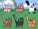 Cat Adopts - Cheap