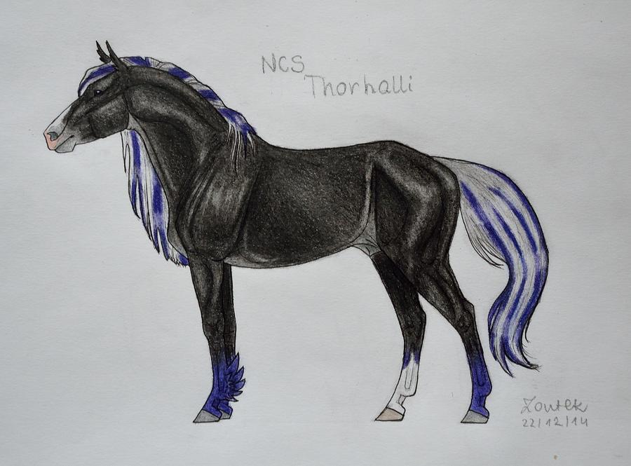 NCS Thorhalli by Salvada