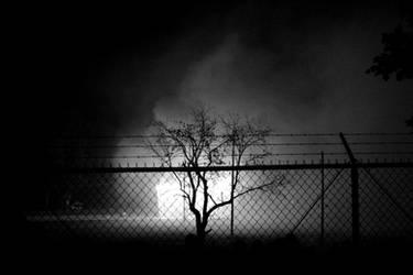 Guarded Tree by Veritas-Aequitas-90