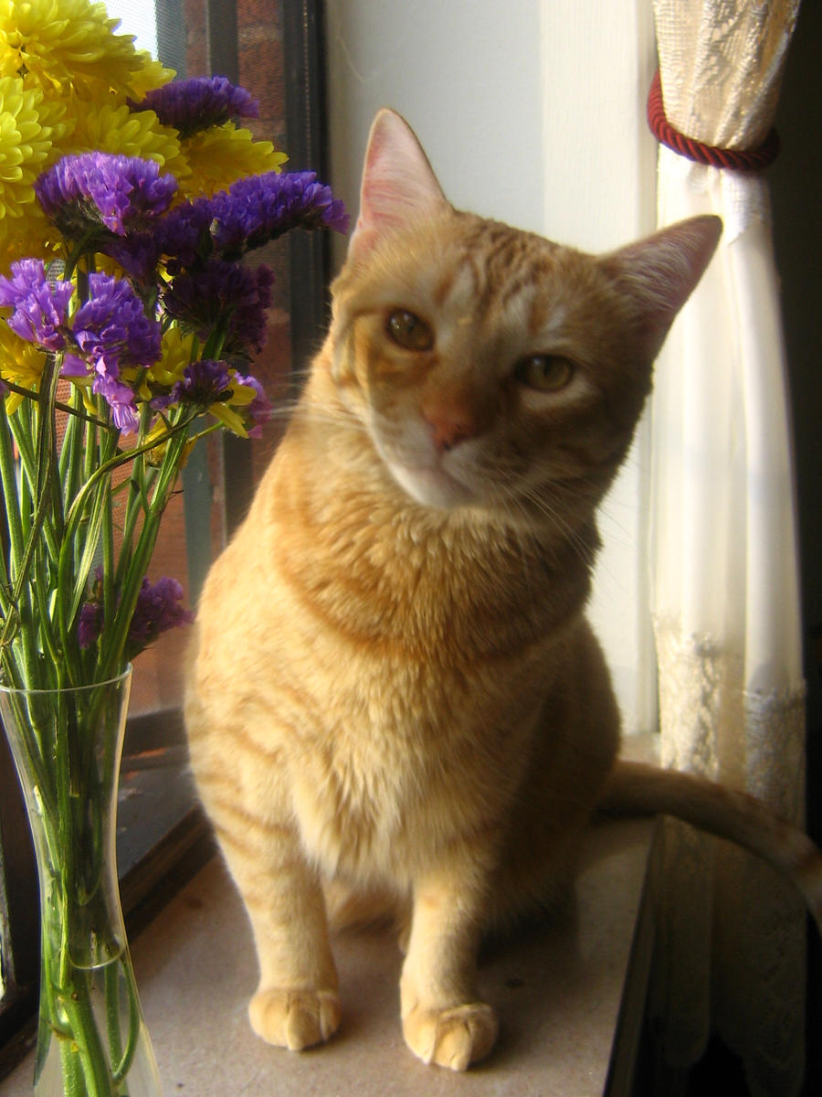 Orange cat and flowers 01 by CotyStock