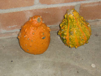 Gourds by CotyStock