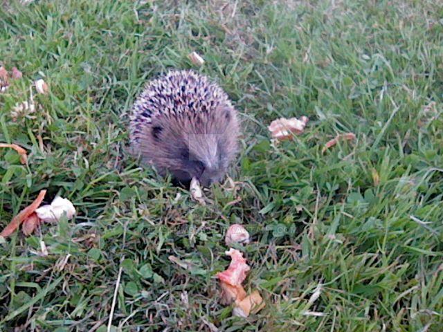 Hedgehog the Sanic by venom9999