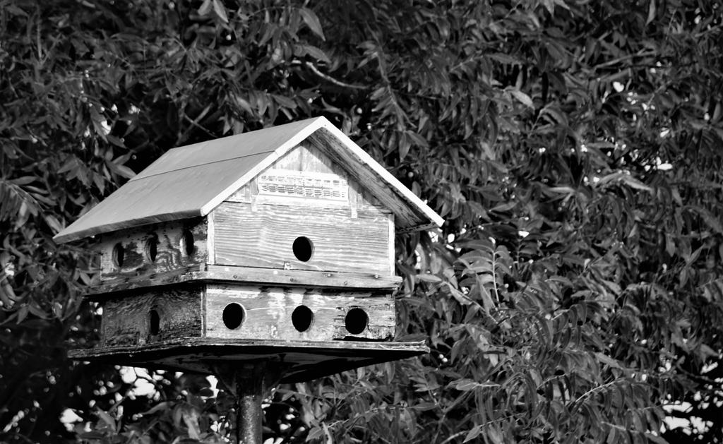 Old Bird House by TSmith13