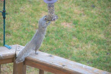 Hungry squirrel by TSmith13