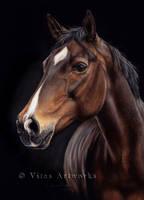 Horse drawing by VitasArtworks