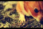 hamster closeup