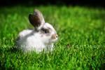 The baby rabbit by Healzo