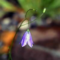 Flower Teardrops by Healzo