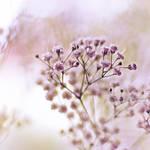 Fresh Breath by Healzo