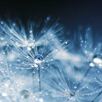 Let it Rain by Healzo