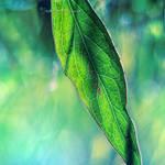 Feeling Green by Healzo