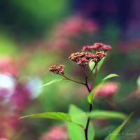 Colors of Nature by Healzo