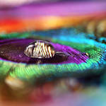 Colors of Happiness by Healzo
