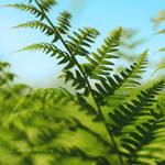 Green Life by Healzo