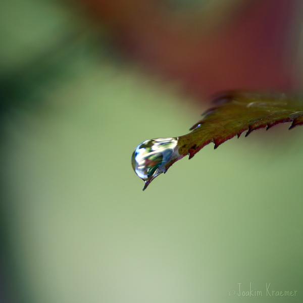 Inner Beauty by Healzo