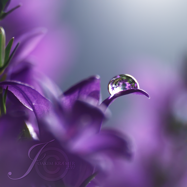 VIOLET Lonely_star_by_Healzo