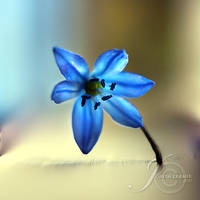 Spring Awakening by Healzo