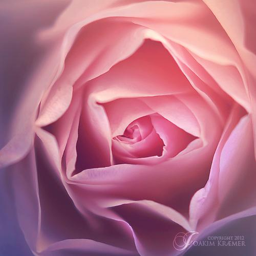 Bloom by Healzo