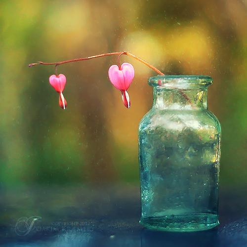 Bleeding hearts by Healzo