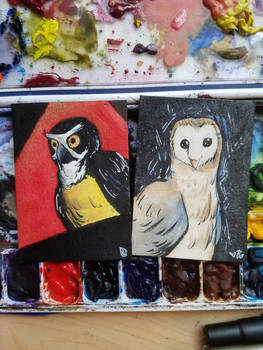 ATC// Spectacled and Barn Owls