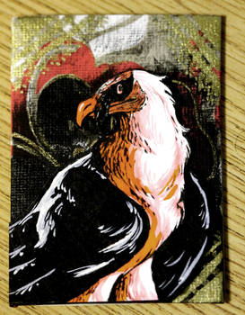 ATC// Bearded Vulture 2 for Kailavmp