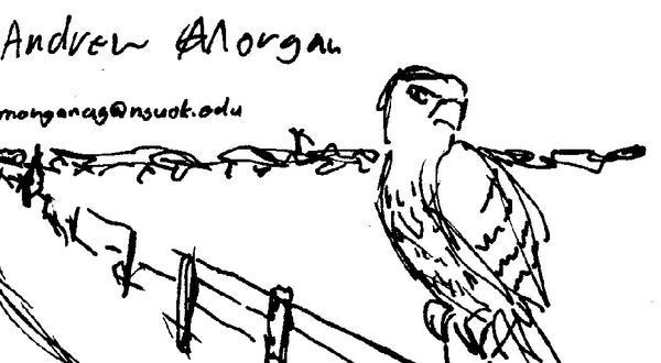 Hawk card by AGMorgan