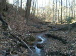 River in the Woods