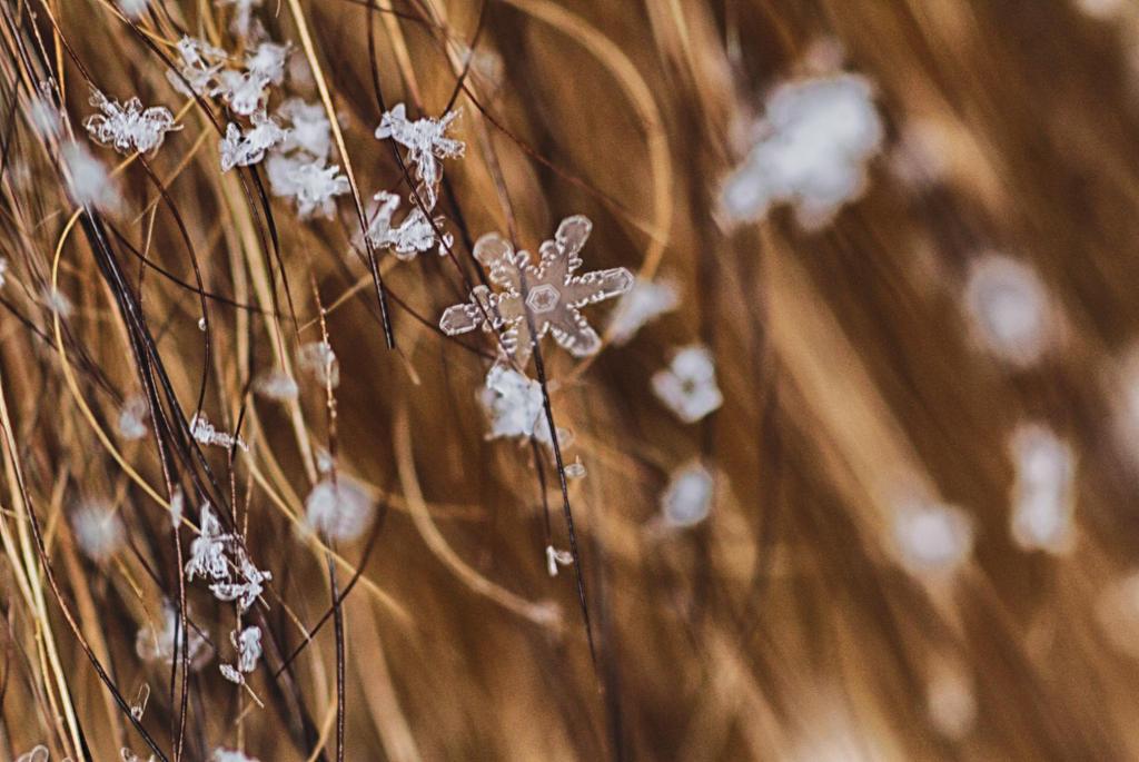 Fox Snow by cedarlili