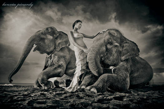 the girl and the elephants