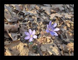 2 floricele by XtraVagAnT