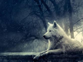 Wolf wallpaper by xxtashy