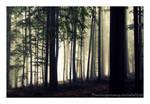 Autumn feelings no.7 by naturetimescape