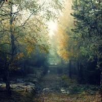 Autumn feelings no.19 by naturetimescape